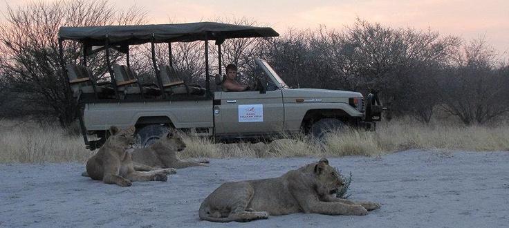 Haina Lodge game vehicle  #kalahari #botswana #safari #africa #travel #bushmen #desert #bigfive #wildlife #animals #lodgeaccommodation #gameviewing