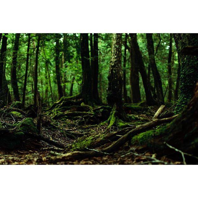 【breakinghyp】さんのInstagramをピンしています。 《森の奥には何があるんだろう。 #風景 #自然 #森 #木 #樹海 #苔 #山梨 #青木ヶ原樹海 #富士 #富士山麓 #写真好きな人と繋がりたい #landscape #nature #forest #wood #japan #nikon #d5300》