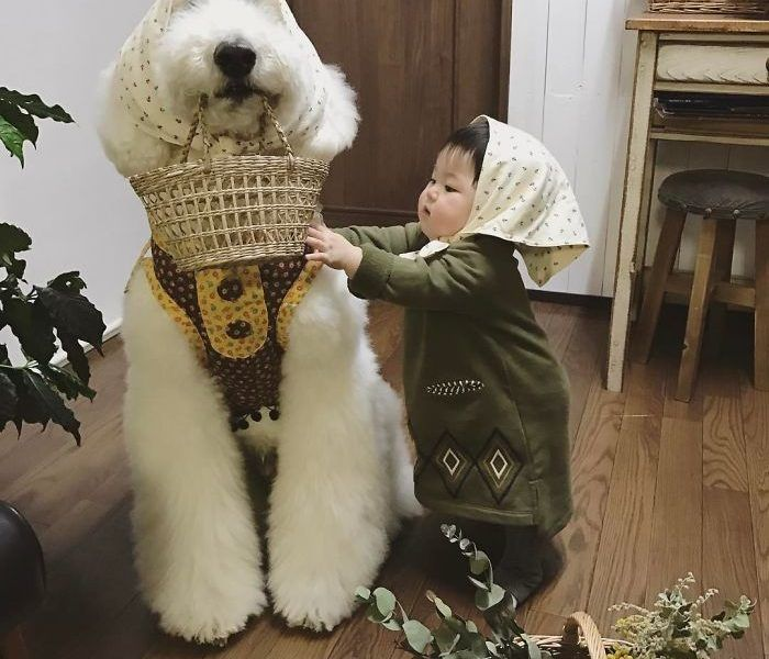 Esta niña japonesa y su caniche te alegrarán el día