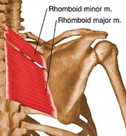 Sore shoulders can be a right pain, excuse the pun. Most of the common causes of shoulder pain can be easily alleviated using simple stretches and flexibility exercises, such as the 5 outlined here.
