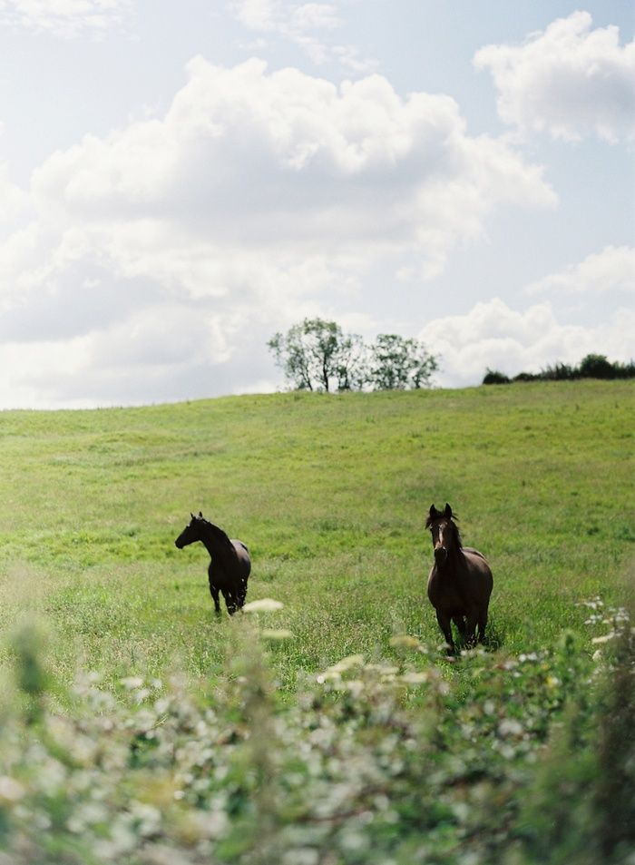21 Best Green Pastures Images On Pinterest