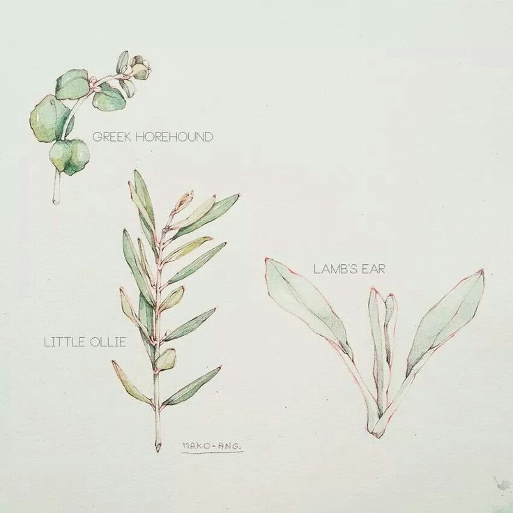 Plants. #sketch #illustration #freehand #practice  #botanical #plants MARTHA STEWART Living Thailand July 2012