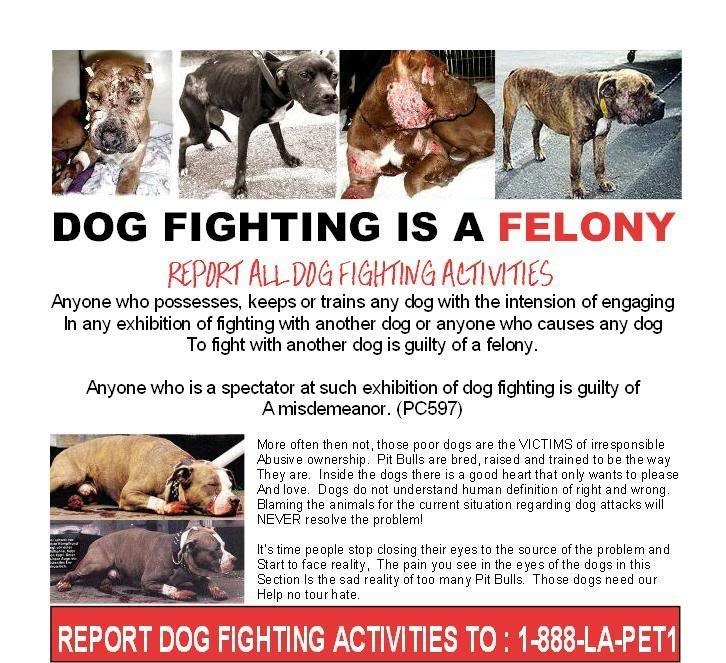 fight for animal rights Dog fighting is one of the most heinous forms of animal  dogfighting is a type of blood sport in which dogs are forced to fight one another for  all rights.