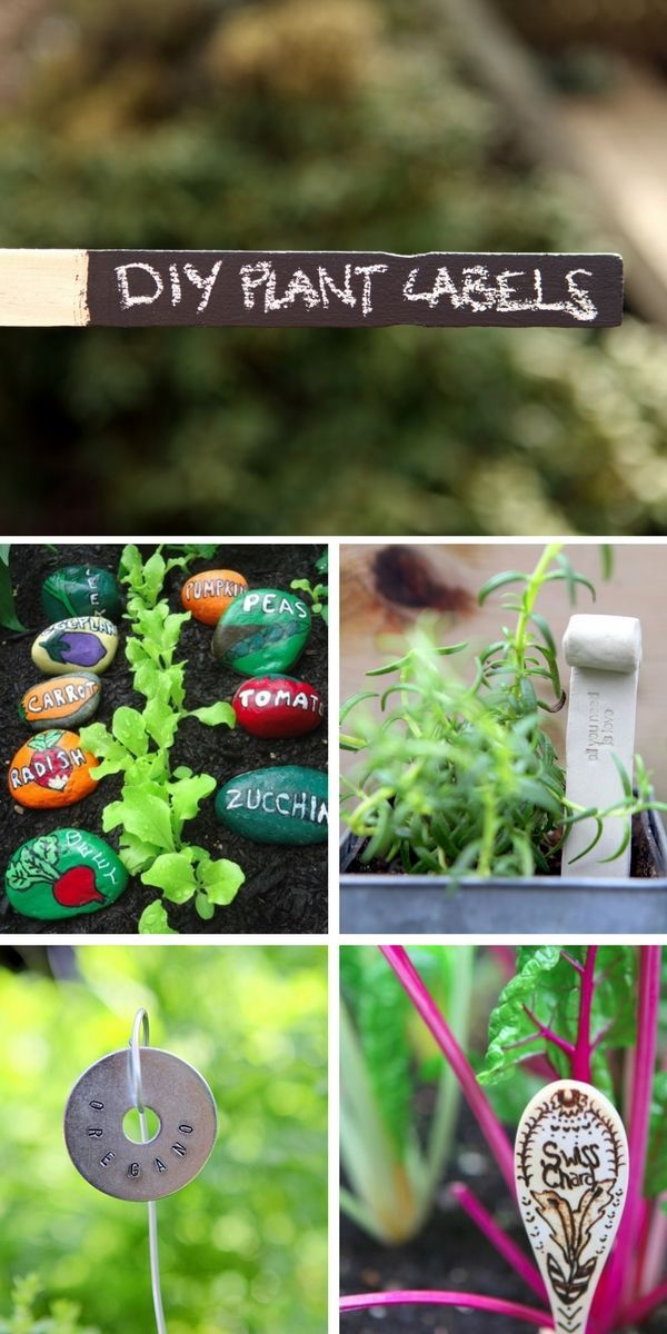 560 best images about creative gardening on pinterest for Easy to keep garden plants