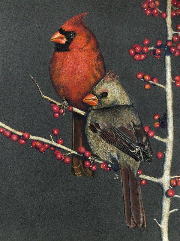 Красные кардиналы на падубе кардинал, птицы, графика, падуб, рисунок, моё