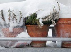 Balkonpflanzen winterfest machen – 5 wichtige Tipps