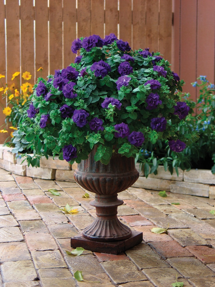 Double Wave Blue available at Greendell. Join us in April of 2013 for our container workshop! View more at - wave-rave.com