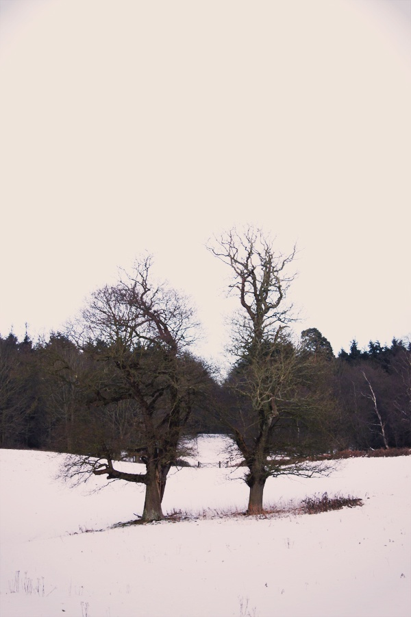 Markers in winter (Felbrigg Hall)