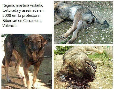 bestiality as a form of animal abuse Bestiality, also known as zoophilia, is when a human has sexual intercourse with an animal countries that outlaw bestiality do so on the grounds that it is animal abuse.