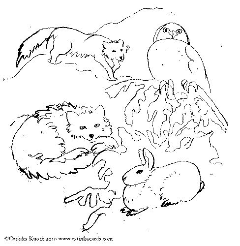 coloring pages of arctic animals - photo#24