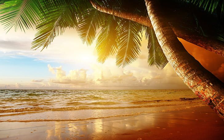 Summer Tropical Scenery Sunset Sea Ocean Palm Trees Sunset Green And Brown Tropical Tree Illustration Hd Sunrise Landscape Ocean Sunset Photo Canvas Art