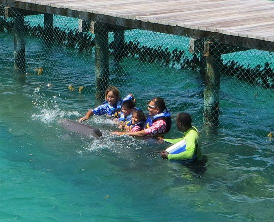 Family fun at Dolphin Discovery Anguilla    http://www.dolphindiscovery.com/anguilla/anguilla-location-overview.asp