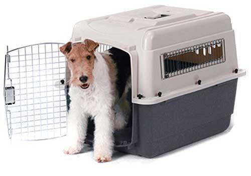 """El transportín puede convertirse para el perro en un lugar privado y, dada la ausencia de estímulos, en una """"cámara de relajación"""".       ..."""