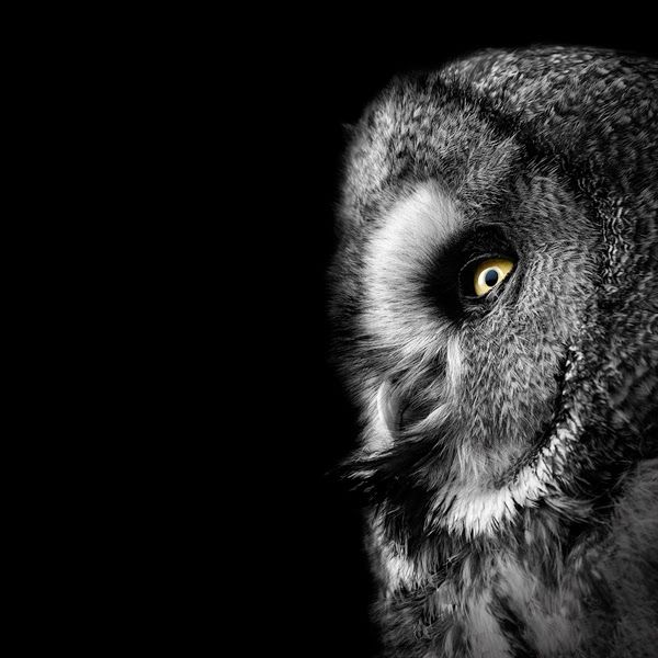 Best Art Lukas Holas Images On Pinterest Black And White - Breathtaking black and white animal portraits by lukas holas
