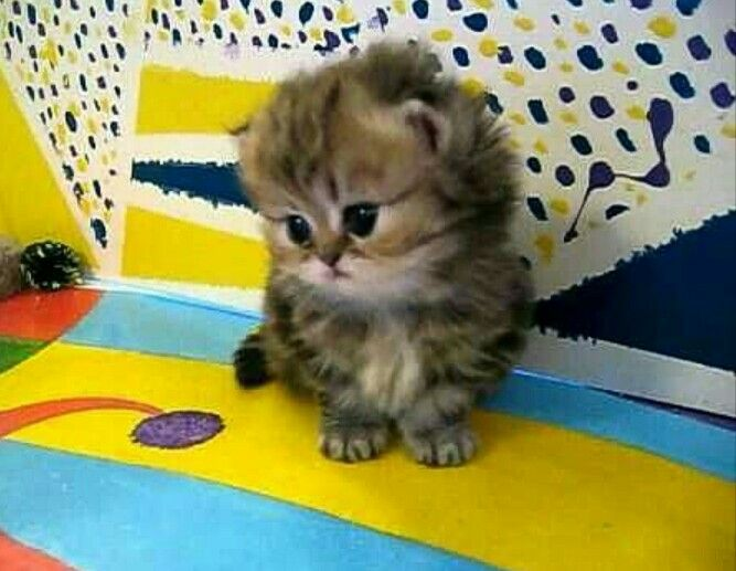 Pin By Monnie Mcintosh On Boo I M A Cat Enthusiast Cute Animals Cute Cats Kittens Cutest