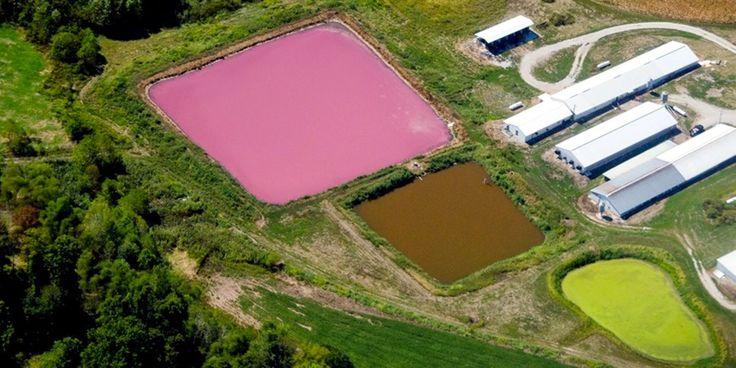 Court Orders EPA to Close Loophole, Factory Farms Required to Report Toxic Pollution The DC Circuit Court ordered the U.S. Environmental Protection Agency (EPA) Tuesday to close a loophole that has allowed hazardous substances released into the environment by concentrated animal feeding operations (CAFOs) to go unreported.
