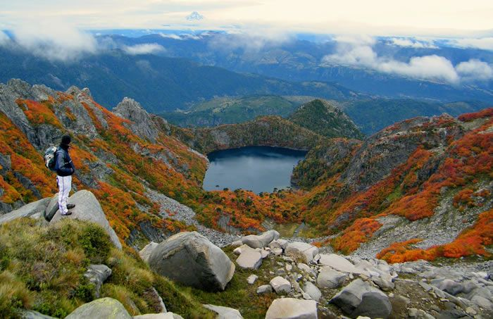 Conguillio national park - Google Search