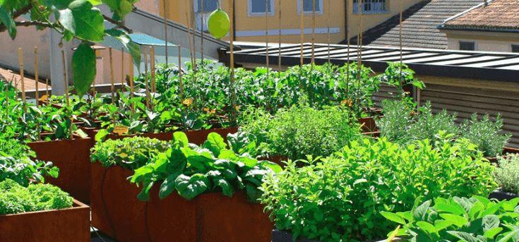 Un salotto verde all'aria aperta, la vista mozzafiato sui tetti di Milano per l'aperitivo che porta i valori della sostenibilità ed etica. Orto, primizie, profumi  ...