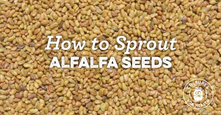 How To Sprout Alfalfa Seeds