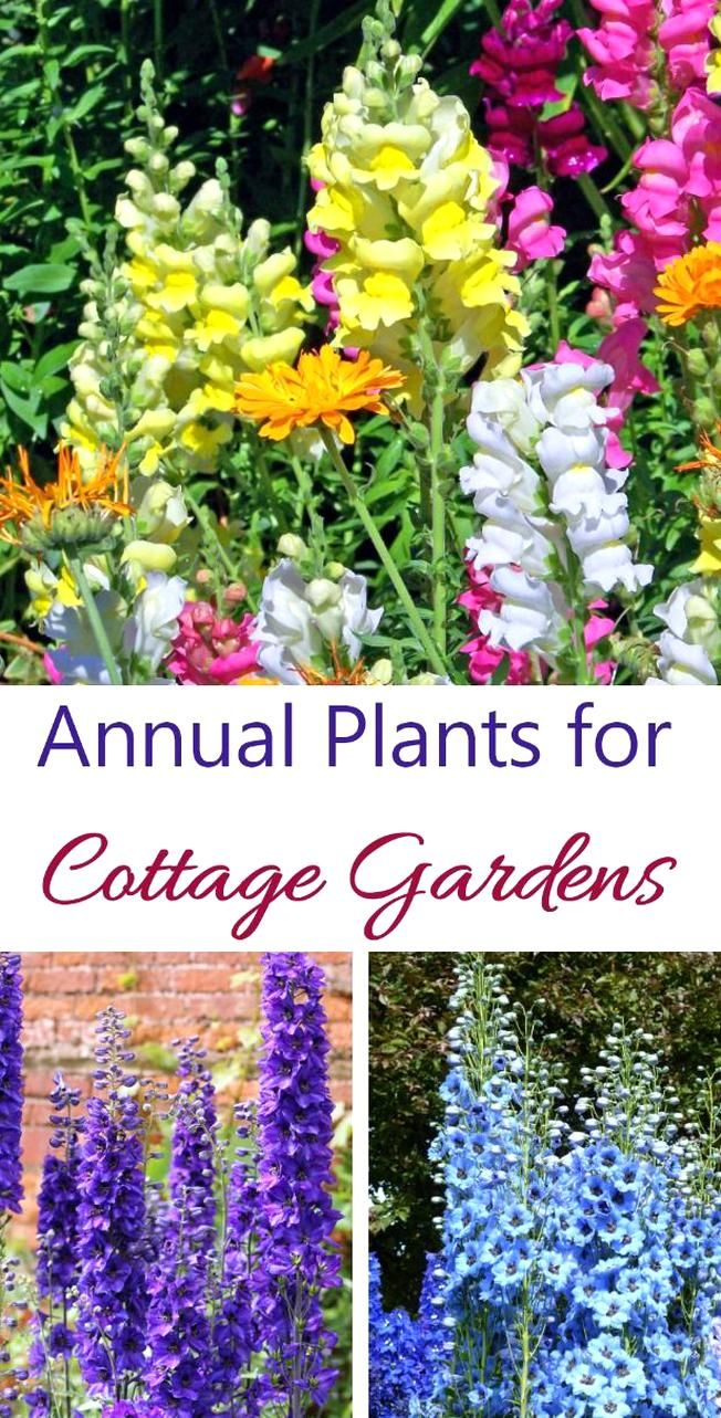 Annual Plants Last One Year But Give Lots Of Color To A Cottage Garden Snapdragons Delphiniums And Larkspur Are Good In 2020 Annual Plants Cottage Garden Plants Plants