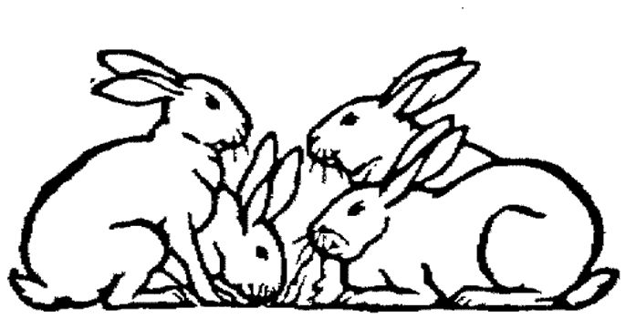 GOOD INFO ON RABBITS. You may ask why meat rabbits? I will go over the basics for why I believe everyone should be raising meat rabbits on the homestead. I could go on forever about the benefits of raising rabbits for m...