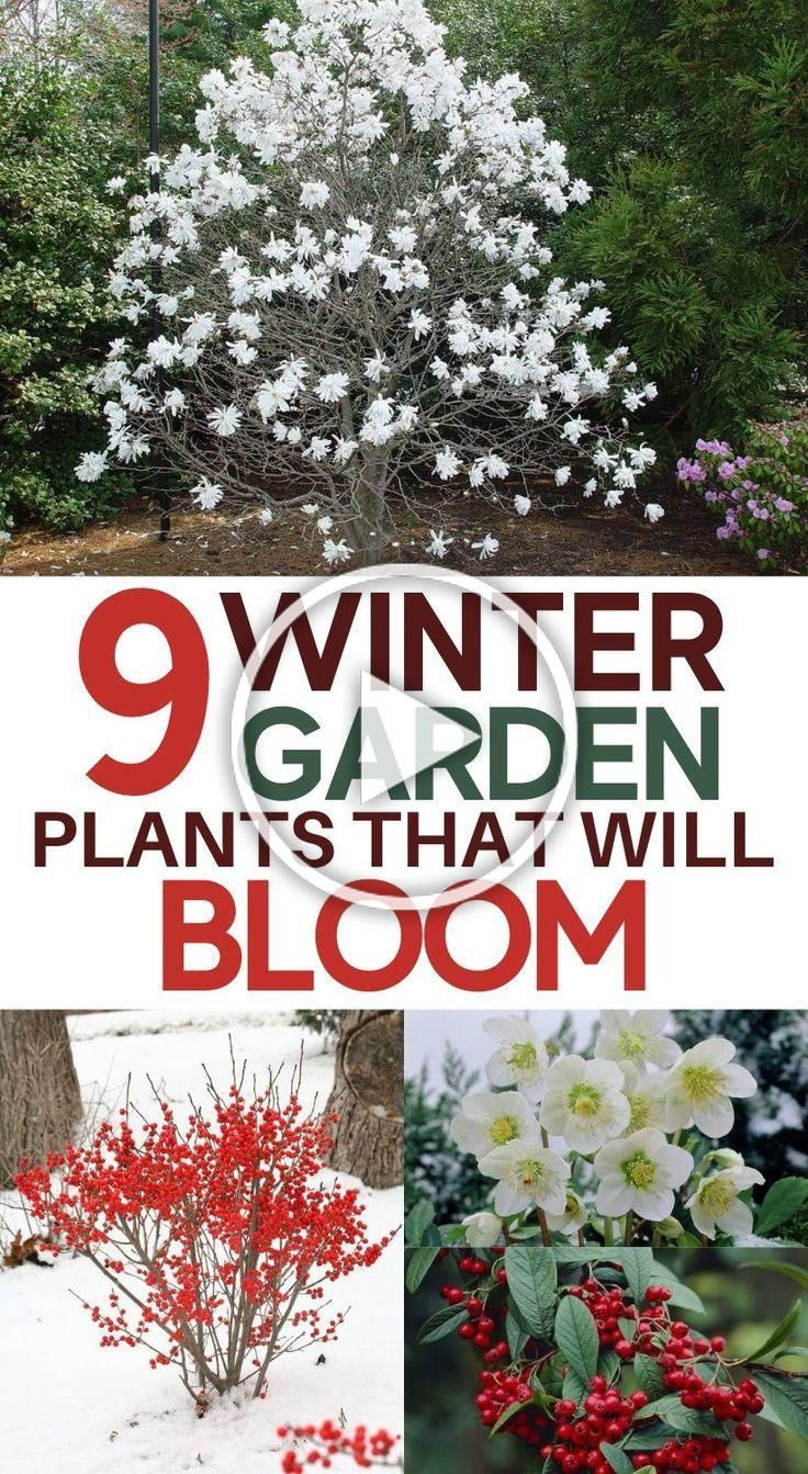 Winter Blooming Flowers Looking For Cold Weather Plants That Bloom In Winter These Gorgeous Colorful Flowers Will A Plants Winter Garden Cold Weather Plants