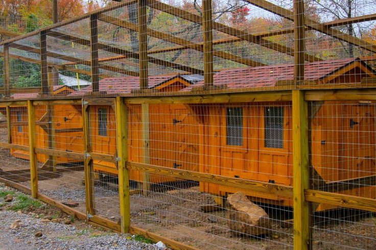 Black copper marans for sale serama for sale heritage for Fancy chicken coops for sale