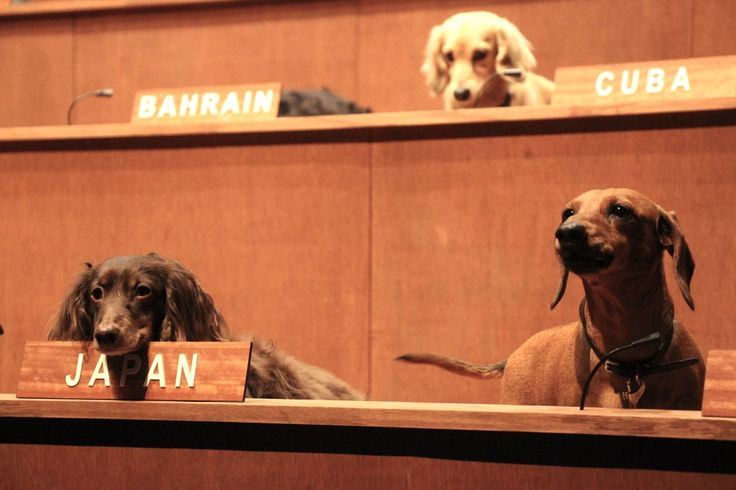 Dachshund UN at World Stage
