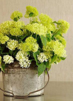 Floral Centerpieces, Beautiful Flower, Green Hydrangeas, Galvanized Buckets, Farms, Summer Buckets, Simple Centerpieces, Spring Bloom, Artificial Flower
