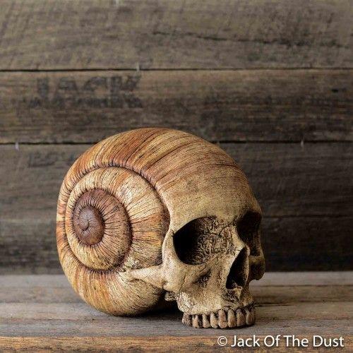 Snail Skull