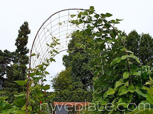 56 Best Gardening Fence Gate Trellis Arbor Images On