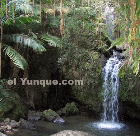 El Yunque Tropical Rainforest, Puerto Rico