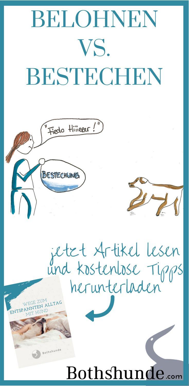 positives Hundetraining || Bestechung || Hund belohnen || ohne Bestechung || 1x1 Hundetraining