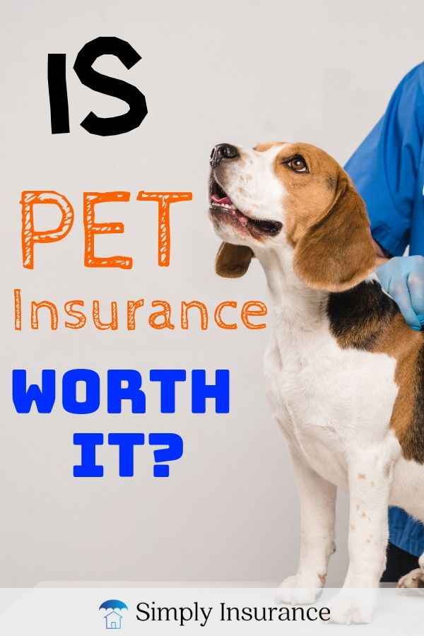 Is Pet Insurance Worth It In 2020 Pet Insurance Pet Insurance Quotes Pet Insurance Cost