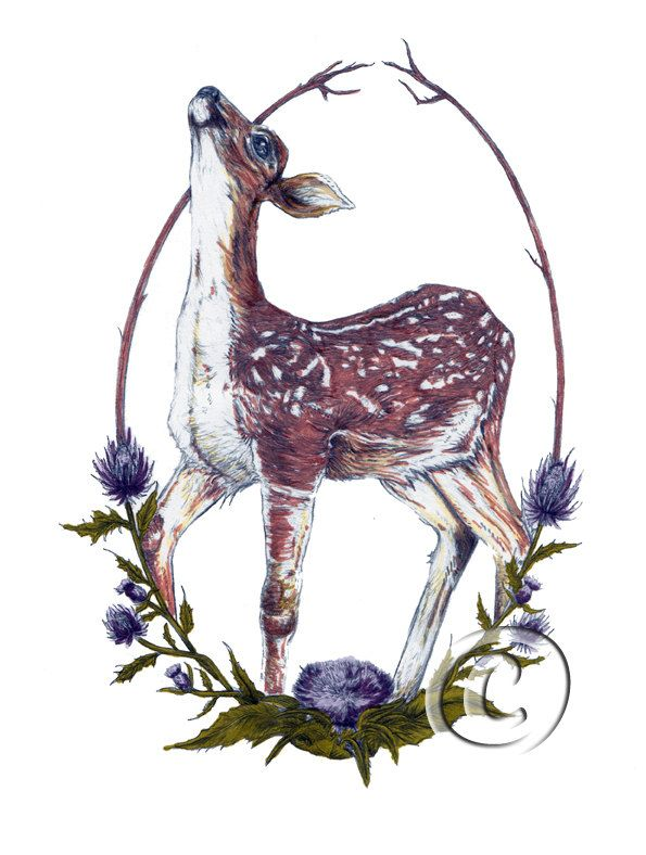 A4 Fawn and Thistle A4 Giclee Print // Deer Doe by FawnandThistle