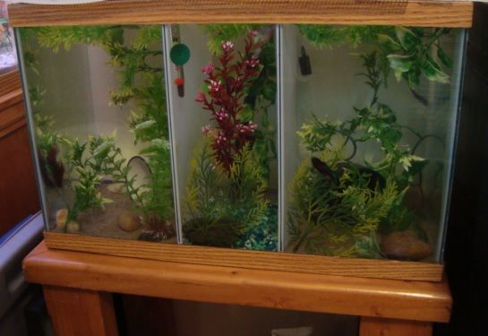33 best images about fishy on pinterest betta fish tank for Diy fish tank divider