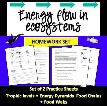 130 best ecology lessons for middle and high school images on 2 practice sheets all about energy flow make a great addition to your ecology unit sciox Choice Image