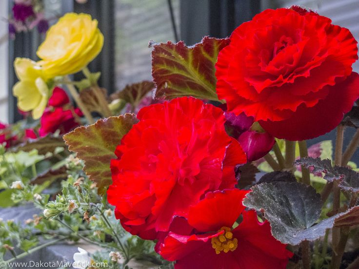 Minnekhada Lodge // Minnekhada Regional Park // Vancouver Wedding Photographer // Image by Ray Urner // http://www.dakotamaverick.com