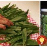 Stačí ho len dať do pohára a zaliať: Tento recept z medvedieho cesnaku vám prečistí obličky, močové cesty a poradí si aj s vysokým tlakom!