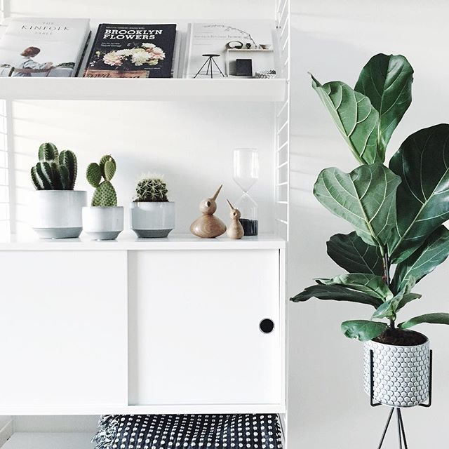 Plant tripod. Simplistic, stylish way of showing off plants indoors.