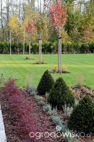 Ogród z lustrem - strona 335 - Forum ogrodnicze - Ogrodowisko