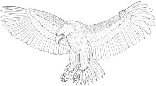 How to draw an Eagle Art Tutorials
