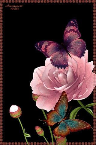 Анимация. Бабочки…