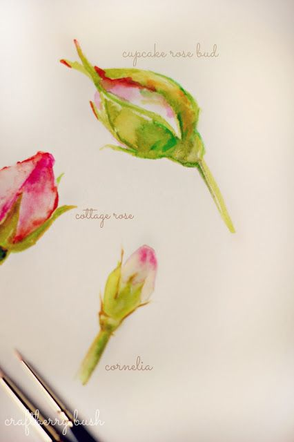 Craftberry Bush: A peek into my sketchbook...