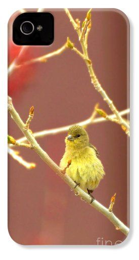 ... and Samsung Galaxy Phone Cases : Pinterest : D, Products and Spring
