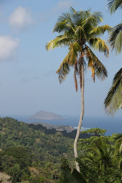 Palm Tree and fantastic vistas - Comoros, Africa