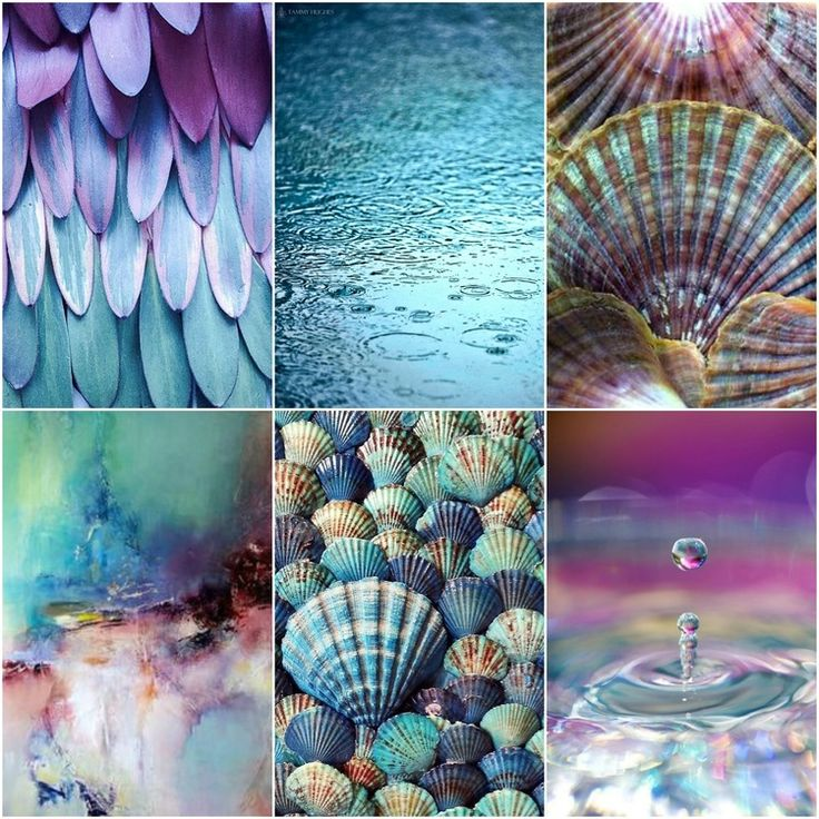 feathers, water, scallop shells, abstract art, blue shells, drop.