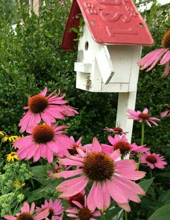 Bird house in garden!