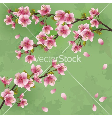 Vintage background with japanese cherry tree vector by silvionka on VectorStock®