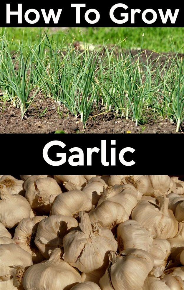 cdc451ef3ecae1bbf7fd0ca3b3a0ffcf - Is Terro Safe For Vegetable Gardens